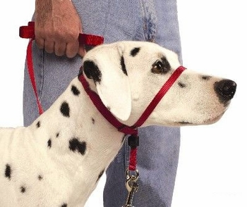 petsafe-gentle-leader-quick-release-headcollar-7