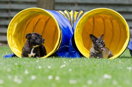two-dogs-in-the-tunnel-750598_960_720